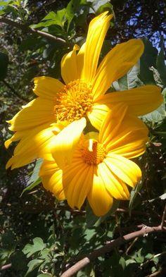 Q bella flor del campo