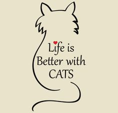 New tattoo dog cat quotes ideas I Love Cats, Cute Cats, Funny Cats, Funny Humor, Crazy Cat Lady, Crazy Cats, Gatos Cats, Cat Quotes, Cat Sayings