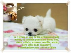 ¡Ternura! escrito por Una Taza de Café con Dios!