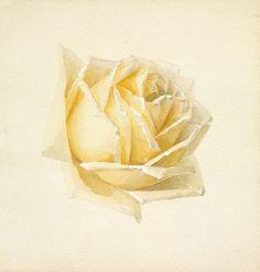 Study of a Rose, Paul de Longpré,  circa 1898 Drawings Watercolor and graphite.