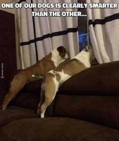 """""""Clearly one of our dogs is smarter than the other."""" ~ Dog Shaming shame"""