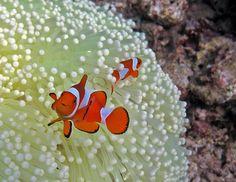 Diving at Raja Ampat