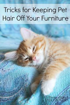 Tricks for Keeping Pet Hair Off Furniture - Whether you have allergies or just want to keep your furniture looking nice, these tips are for you!