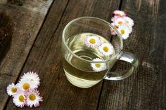 Napar z ziela stokrotki: Garść kwiatów stokrotki zalej  250ml wrzącą wodą i odstaw pod przykryciem na kilkanaście minut. Przecedź kwiaty stokrotki. Napar pij trzy razy dziennie. https://www.facebook.com/zastosowanieziol/