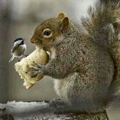 Ever seen squirrels holding a flag, squirrels singing, dancing squirrel, with funny hair? If not lets show you some beautiful squirrel photos to amaze you. Cute Baby Animals, Animals And Pets, Funny Animals, Wild Animals, Beautiful Creatures, Animals Beautiful, Tier Fotos, Pet Birds, Mammals