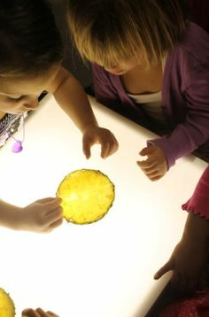 Investigating pineapple seeds on a light board.