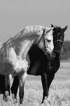 Equine - Ebony and Ivory