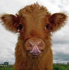 Such a cute calf, remember Ladybug?