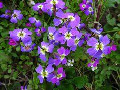 Fleurs des villages et des champs – Communauté – Google+
