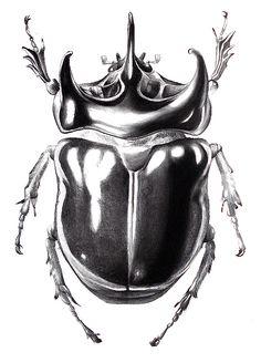 Alfred Marasigan. Scientific illustration