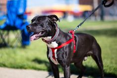 Adopt a Dog from Dogs 2nd Chance