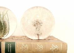 Paper Weight Dandelion