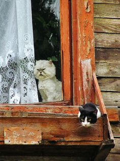 """Outside cat: """"What is that thing in the window??!!"""""""