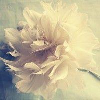Feather Flower Tutorials | Handmade Flower Tutorials