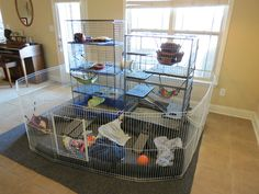 Indoor ferret enclosure: two tall cages inside a fenced area