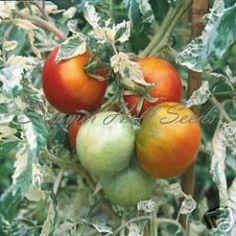 Tomato...... [variegated heirloom]