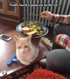 20 Funny Animals Photos For Your Tuesday   #FunnyAnimals #cattruths