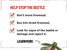 KIDS' CORNERYou can all play a role in helping to protect our ash trees. These creative tools and activities will enable you to learn more about the Emerald Ash Borer Beetle (EAB) and protect our precious ash trees — all while having lots of fun.