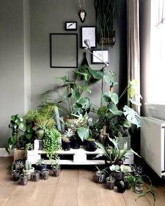 Nou, @gojungle.nl heb de boel ook 'even' bijelkaar gezet voor jou hashtag #plantcountsession! De teller staat hier op 53 planten én stekjes. Het is wel een leuk gezicht zo! Hoeveel plantjes hebben jullie? #urbanjungle #plants #kamerplanten #indoorplants #plantlove Houseplants, Indoor Plants, Sweet Home, Room, Inspiration, Decor, Seeds, Inside Plants, Bedroom