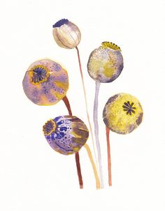 "Poppy Pods - Archival Print. Watercolor. unitedthread-etsy. ""I'm always amazed by how interesting the flower pods and seed heads can be. The colors and textures are so unexpected. These speckled poppy pods are like little jewels of the garden."""