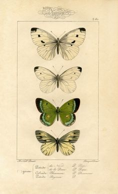 Natural History - free printable image - Moths / Butterflies (print of recycled paper of course : )