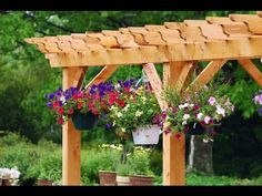 Top 100 Hanging Flowers For Your Yard