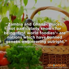 Zambia and Ghana have banned genetic engineering foods out right!