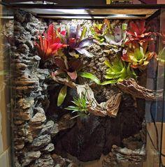 Home Decor Upgrades: 7 Reptile Tank Ideas for Inspiration - terraium - Animales Tree Frog Terrarium, Terrariums Diy, Water Terrarium, Gecko Terrarium, Terrarium Reptile, Terrarium Ideas, Reptile House, Reptile Room, Reptile Cage