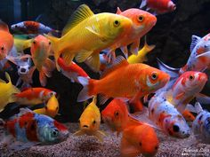 """This pic is dedicated to my best friend also know as """"fishy"""""""