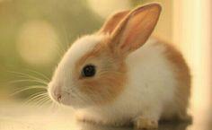 Eglenceli Gercekler Tavsanlar Kendi Kakasini Yer Rabbit Wallpaper Animal Hd