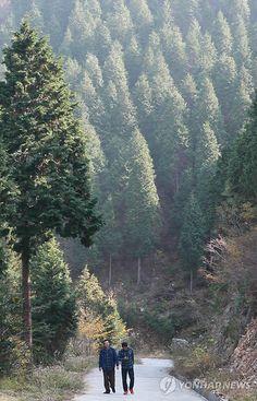 피톤치드 가득한 남해 편백자연휴양림(성연재 기자)