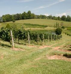 Vineyard at Crane Creek
