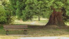 Parc Urbain à Savigny-le-Temple - Détente à l'ombre d'un bel arbre