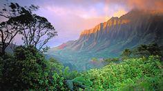 Dschungel, Natur, grün Vektorgrafik - ForWallpaper.com