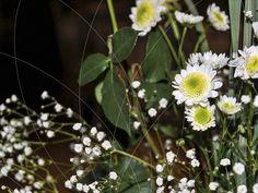 15 Años Lucia Dandelion, Flowers, Plants, Fiestas, Weddings, Dandelions, Plant, Taraxacum Officinale, Royal Icing Flowers