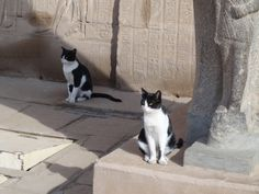 Did you know... Ancient Egyptians first adored cats for their finesse in killing rodents, as far back as 4,000 years ago. www.kittycatweb.com