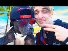 """Mira lo """"PELIGROSOS"""" que son estos Perros. (Ver hasta el final) - YouTube"""