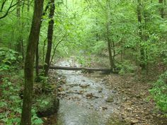 Gap Creek Natural Area – Arkansas Natural Area