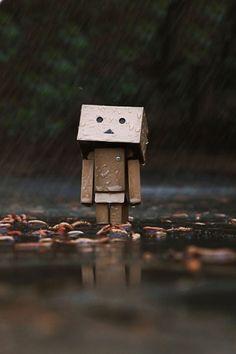 Danbo in the rain.