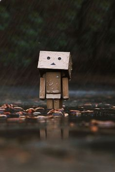 Danbo in the rain.