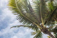 """Dzisiejsze """"Drewniane Ciekawostki"""" w duchu wakacyjnym... ;) Czy wiedzieliście, że #drewno palmowe pozbawione jest sęków? Nie ma na nim również słojów przyrostów rocznych! Takie drewno jest twarde, wytrzymałe i odporne na warunki atmosferyczne."""