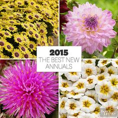 2015 is the year for new annuals. Here is a colorful collection of what you can pot up this spring!