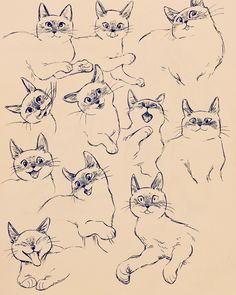 ascending feature - bevsi: my beautiful cat - Bilder & Zeichnungen - Cat Drawing Animal Sketches, Animal Drawings, Art Sketches, Illustration Inspiration, Cat Reference, Cat Sketch, Cat Pose, Cat Character, Fanarts Anime