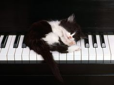 Love cats AND pianos.