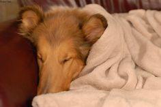 Mit Clickertraining zur Entspannung für den Hund