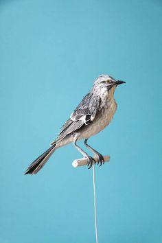 paper-bird-diana-beltran-herrera-3