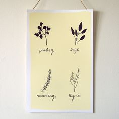 Parsley, Sage, Rosemary and Thyme Print (hand drawn and silk screen printed by fuzzy grapefruit)