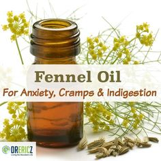 Fennel is a flowering herb hailing from the carrot family of plants. As a digestive health promoting herb, it is in good company with other beneficial herbs like dill and coriander. The seed is most commonly used in culinary preparations, though the essential oil can come from the seed or the aerial (above ground) parts of the plant. Various preparations and applications of fennel have strong and reliable benefits, but safety is a priority with this potent essential oil.