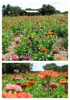 Arnosky Flower Farm