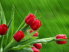 fiori sotto la pioggia - Cerca con Google